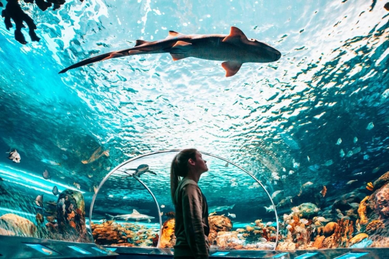 Admission à l'Aquarium Ripley