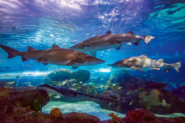 Ripley_aquarium_3.jpg